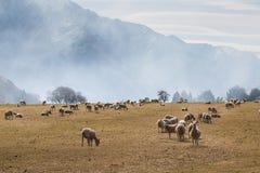 Exploração agrícola e montanhas dos carneiros na manhã Fotografia de Stock Royalty Free