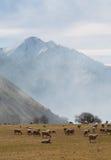 Exploração agrícola e montanhas dos carneiros na manhã Foto de Stock
