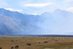 Exploração agrícola e montanhas dos carneiros na manhã Imagens de Stock Royalty Free