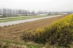 Exploração agrícola em China Foto de Stock