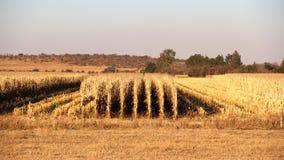 Exploração agrícola em Potchefstroom, África do Sul imagem de stock