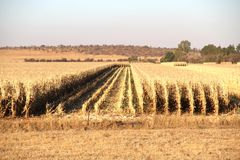 Exploração agrícola em Potchefstroom, África do Sul foto de stock royalty free