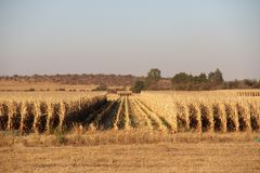 Exploração agrícola em Potchefstroom, África do Sul imagens de stock royalty free