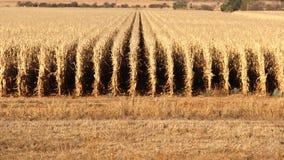 Exploração agrícola em Potchefstroom, África do Sul imagens de stock
