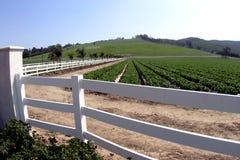 Exploração agrícola extravagante Fotografia de Stock