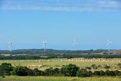 Exploração agrícola, feno, moinho de vento Fotos de Stock