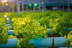 Exploração agrícola hidropónica Foto de Stock Royalty Free