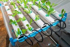 Exploração agrícola hidropônica imagem de stock royalty free