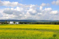 Exploração agrícola histórica de Alaska no verão Fotografia de Stock Royalty Free