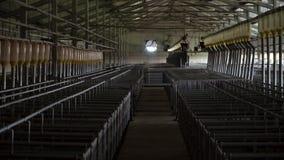 Exploração agrícola industrial moderna para produzir porcos, tecnologia moderna inseminação automatizada da sala vídeos de arquivo