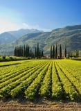 Exploração agrícola italiana Fotos de Stock Royalty Free