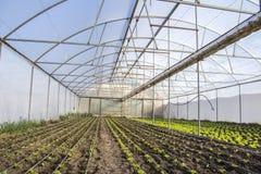 Exploração agrícola moderna para a alface crescente fotografia de stock royalty free