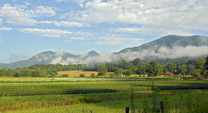 Exploração agrícola na manhã Imagens de Stock Royalty Free