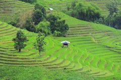 Exploração agrícola na montanha foto de stock royalty free