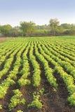 Exploração agrícola Nuts à terra Imagem de Stock