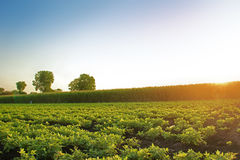 Exploração agrícola Nuts à terra Imagens de Stock