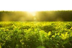 Exploração agrícola Nuts à terra Fotos de Stock Royalty Free