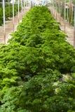 Exploração agrícola orgânica Imagem de Stock Royalty Free