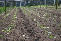 Exploração agrícola orgânica Foto de Stock Royalty Free