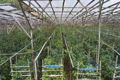 Exploração agrícola orgânica Fotografia de Stock