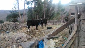 Exploração agrícola rural peruana nos Andes fotografia de stock