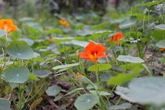 Exploração agrícola surpreendente da flor Imagem de Stock