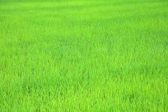 Exploração agrícola tailandesa imagem de stock