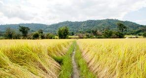 Exploração agrícola tailandesa Fotos de Stock Royalty Free