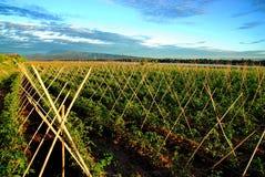Exploração agrícola tailandesa da paisagem Imagem de Stock