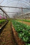 Exploração agrícola vegetal Fotos de Stock Royalty Free