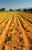 Exploração agrícola vegetal fotografia de stock