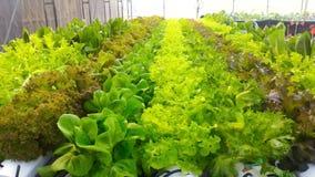 Exploração agrícola vegetal de Hidroponik foto de stock