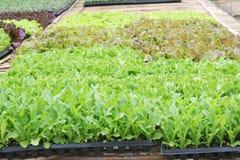 Exploração agrícola vegetal orgânica imagens de stock