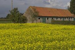 Exploração agrícola velha com flores amarelas Fotografia de Stock