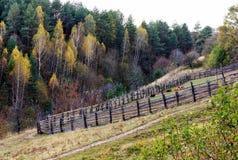 Exploração agrícola velha da vaca em um monte verde Imagem de Stock