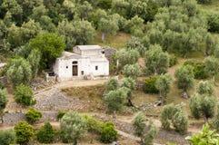 Exploração agrícola velha entre oliveiras Imagens de Stock Royalty Free