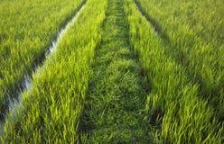 exploração agrícola verde Fotos de Stock Royalty Free