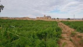 Exploração agrícola verde com tempo bonito no céu azul e nas nuvens de Marrocos fotos de stock