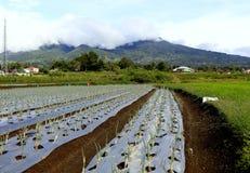 Exploração agrícola verde da união Fotografia de Stock