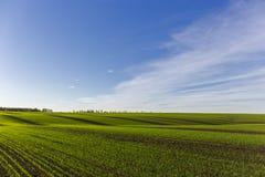 Exploração agrícola verde do campo Imagens de Stock