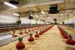 Exploração avícola imagens de stock