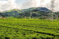 Explorações agrícolas em montanheses em Ruanda, East Africa imagem de stock royalty free