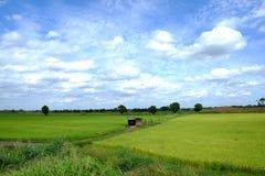 Explorações agrícolas tailandesas imagens de stock royalty free
