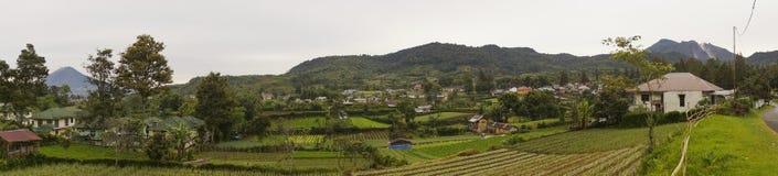 Explorações agrícolas vegetais em Gundaling, Brastagi, Indonésia fotos de stock royalty free