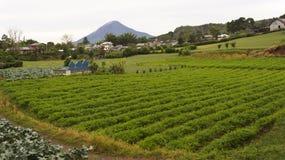 Explorações agrícolas vegetais em Gundaling, Brastagi, Indonésia imagens de stock