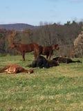 Explora??o agr?cola do cavalo fotos de stock royalty free