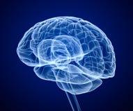 Exploración de cerebro, radiografía ilustración del vector