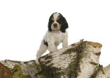 Exploración del perrito Foto de archivo libre de regalías