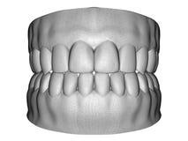 Exploración dental del varón adulto libre illustration
