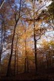 Exploración en el bosque Imágenes de archivo libres de regalías